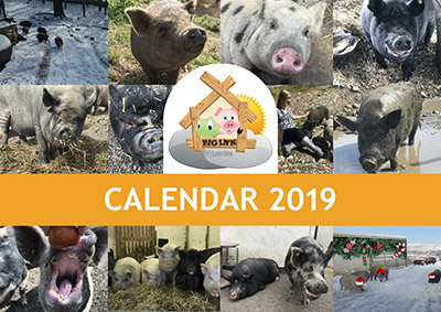 Pigs Inn Heaven Calendar